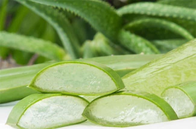 Nha Đam là thành phần có ích cho sản phẩm son dưỡng.